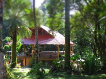 Cashew Hill Jungle Lodge